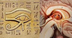 The Pineal Gland was revered during the Egyptian times as the Eye of Horus for a reason, because it is the Seat of the Soul. You can see the Eye of Horus clearly outlines the Pineal Gland. Ancient Aliens, Ancient Egypt, Ancient History, Les Chakras, Eye Of Ra, Pineal Gland, All Seeing Eye, Eye Of Horus, Illuminati