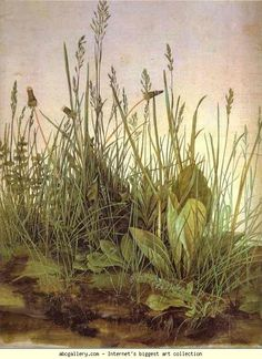 The Large Turf by Albrecht Durer, 1503. Watercolour and gouache on paper. One of my favorites since I first saw a reproduction of it in high school.