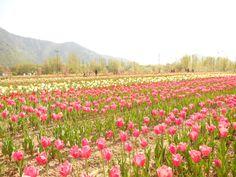 Kashmir - heaven on Earth !!
