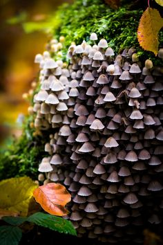 Photograph Magic Mushrooms by Dominik Schön on 500px