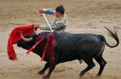 """Support for the proposed new law against bullfighting (confirmation needed) Signez cette pétition: """"Soutien à la nouvelle proposition de loi contre la corrida"""""""