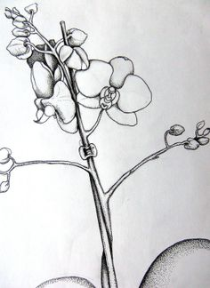 orchid drawing on Etsy