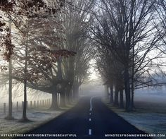Even in Winter, without its colourful canopy, this road can be magical #startthedaywithsomethingbeautiful