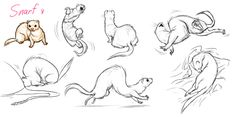 Ferret drawings