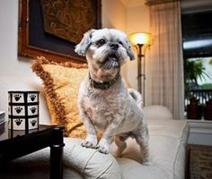 Best Pet-Friendly Getaways Near South Florida