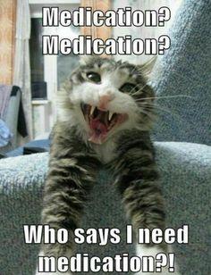 Funny Cat. Cats