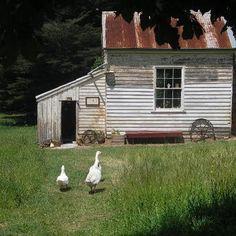 Waratah Angus Farm, NE Tasmania.