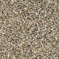 Name: Magnificent Style # 7460 Color # 308 Venetian Gold New Carpet, Venetian, How To Dry Basil, Home Goods, New Homes, Herbs, Color Palettes, Master Bedroom, Houses