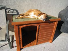 Dog Houses 101: How To Choose The Best Dog House... Or Build Your Own   The Fun Times Guide to Dogs