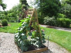Small space Trellis