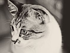 #Caturday(19)