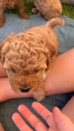 Super Cute Puppies, Baby Animals Super Cute, Cute Baby Dogs, Cute Little Puppies, Cute Funny Dogs, Cute Dogs And Puppies, Cute Little Animals, Cute Funny Animals, Baby Puppies