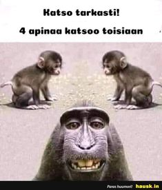 Guess the monkey. - Funny Monkeys - Funny Monkeys meme - - Guess the monkey. Monkeys Funny Guess the monkey. The post Guess the monkey. appeared first on Gag Dad. The post Guess the monkey. appeared first on Gag Dad. Some Funny Jokes, Crazy Funny Memes, Funny Quotes For Kids, Funny Animal Memes, Wtf Funny, Funny Animal Pictures, Funny Kids, Funny Photos, Funny Images