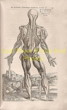 new to site Anatomy – Andreas Vesalius 1543p