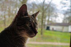My cat Benji!
