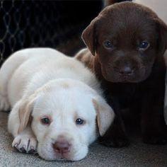 Amor...Respeito e Compaixão pelos Animais - Comunidade - Google+