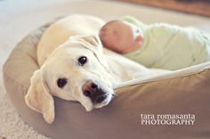 Dog and newborn