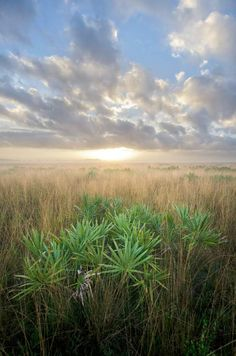 Kissimmee Prairie Sunrise by Carlton Ward Jr - The Gallery #photography #florida