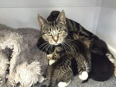 Mother-cat-sneaks-into-a-vet-clinic-to-be-with-her-abandoned-kittens.jpg