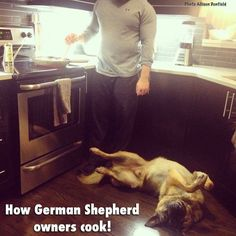 100% true...although I think it's all dog owners...both of my dogs are practically rugs in the kitchen...