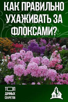 Как правильно ухаживать за флоксами? #сад #огород Small Farm, Beautiful Gardens, Garden Plants, Floral Design, Flowers, Baby, Gardens, Lawn And Garden, Floral Patterns