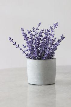 Φυσικά εντομοαπωθητικά -7 φυτά εσωτερικού και εξωτερικού χώρου που διώχνουν τα κουνούπια   GREEN   iefimerida.gr Best Plants For Bedroom, Bedroom Plants, Bedroom Wall, Blue Home Decor, Diy Home Decor, Lavender Benefits, Home Air Purifier, 3d Wall Decor, Lavender