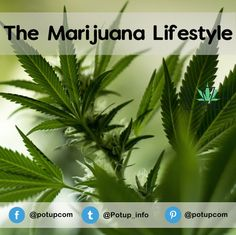 The marijuana lifestyle and hemp tend to go hand in hand, and today you can find quite a few...