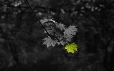 nature leaves outdoors selective coloring  / 1440x900 Wallpaper
