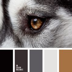 The photo is cool and the black, grey and brown #colorpalette is gorgeous too.