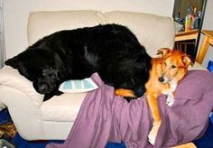 This big baby, who doesn't even notice he's sitting on his friend.