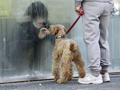A girl in isolation  for radation control, through a window looking her dog in Japan  on March 14, 2011.