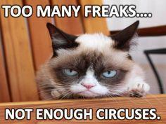 Grumpy Cat Memes That You Will Love! - Grumpy Cat Memes That You Will Love! The Effective Pictures We Offer You About Funny fails A quali - Grumpy Cat Quotes, Funny Grumpy Cat Memes, Funny Animal Memes, Funny Animal Pictures, Funny Cats, Cute Cats, Funny Animals, Cats Humor, Funny Quotes