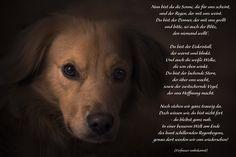 Nun bist Du die Sonne, die für uns scheint ... #Trauergedicht #ANUBIS #Tierbestattung
