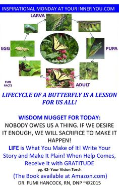 Inspirational Monday: What life lessons can we learn from the butterfly?