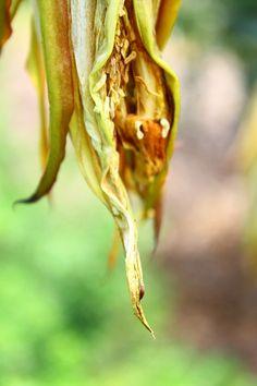 Earth Laughs in Flowers - Ralph Waldo Emerson by Lawrence Jean-Louis, via Behance