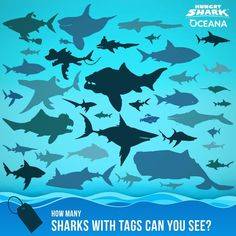 346 Best Hungry Shark Evolution images in 2019 | Evolution, Shark