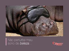Não perturbe meu sono de beleza... #bichinhosFofos #humor