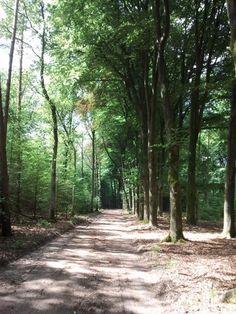 een bosweg...    verkleining    g2a, bv