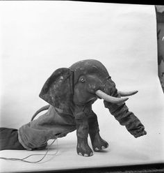 Excellent elephant.