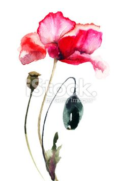 Poppy, water colour