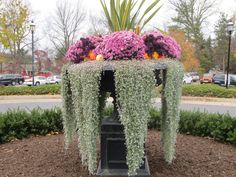 The planter at the entrance to the Nittany Lion Inn is overflowing with Dichondra argentea 'Silver Falls' not water. The Arboretum at Penn State also uses Silver Falls in its hanging planters.