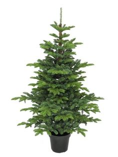 5ft Potted Eden Pine 100% Feel-Real Artificial Christmas Tree