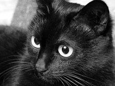 Nie masz pojęcia, jaki drapak wybrać dla swojego kota? Dzięki naszemu zestawieniu dowiesz, jakie drapaki są do wyboru i wybierz odpowiedni…