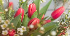 KW1 kurzstielig: BE HAPPY | 20 pinke Tulpen und 10 Stiele Waxflower für Ihre Tischvase | BLOOMY DAYS