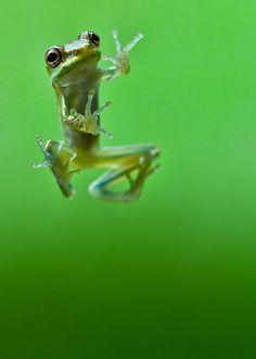 Kung Fu fighting Frog ~ Rmsp