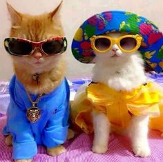 Totes Fab - LOLcats is the best place to find and submit funny cat memes and other silly cat materials to share with the world. We find the funny cats that make you LOL so that you don't have to. Funny Animal Pictures, Cute Funny Animals, Funny Cats, Baby Pictures, Animals And Pets, Baby Animals, Gatos Cool, Photo Chat, Cat Aesthetic