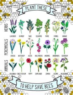 SAVE THE BEES!!! #doit <3
