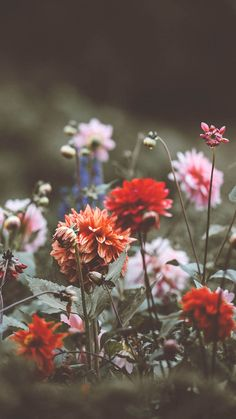 Celebrating Summer with 21 Wildflower iPhone Wallpapers   Preppy Wallpapers