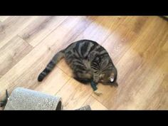 Oscar and his kicker fish from Creswell Cats Fish, Cats, Youtube, Gatos, Kitty, Cat, Youtubers, Youtube Movies