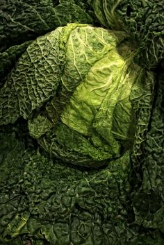 Simply Cabbage..Still Life Food Photography From The by FrameOnYou, $35.00
